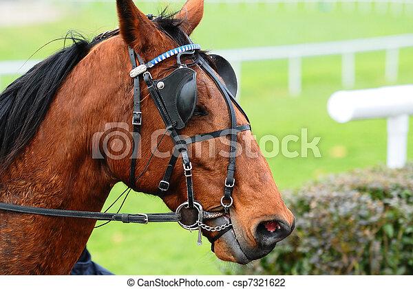 pferderennsport - csp7321622