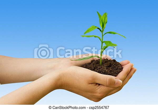 pflanze, agriculture., hand - csp2554767