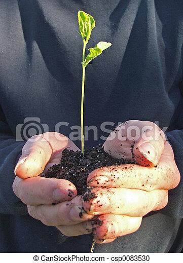 Plane einen Baum - csp0083530