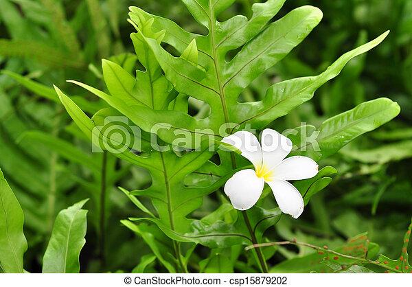 pflanze, blume, grün - csp15879202