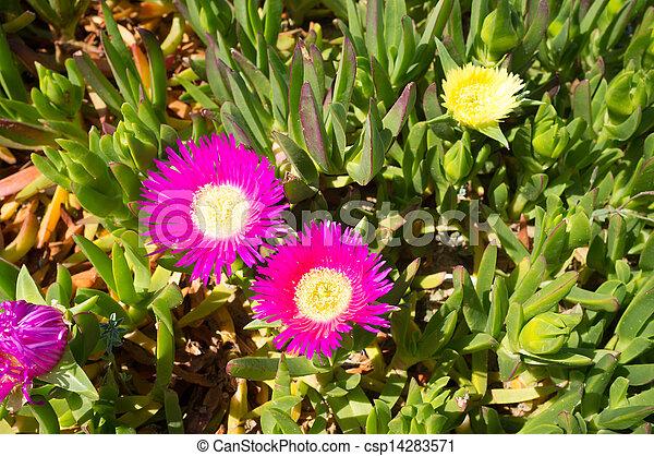pflanze, eis - csp14283571