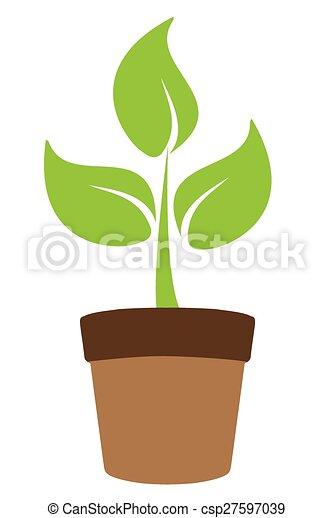 pflanze - csp27597039