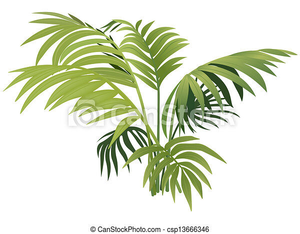 pflanze, farn - csp13666346