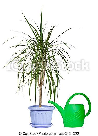 Dekorativ, pflanze, innen, topf, bewässerung, plastik,... Stockfoto ...