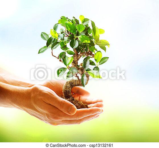 pflanze, menschliche , natur, aus, hände, grüner hintergrund, besitz - csp13132161