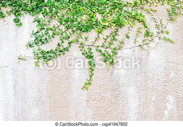 Pflanze, wand, kriechpflanze, design, hintergrund, daheim, grün ...