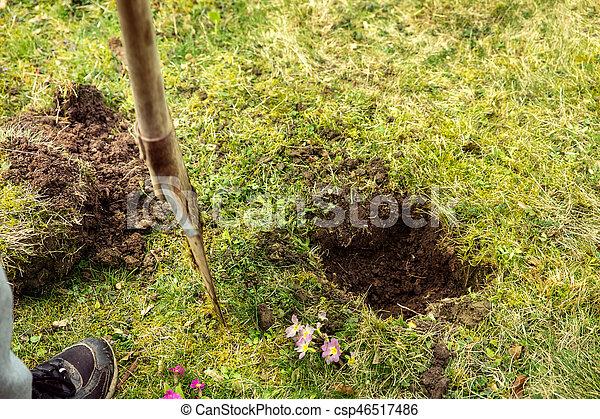 Ganz und zu Extrem Pflanzen, arbeiten garten arbeit, baum, graben, loch, spaten, wiese. &AD_79