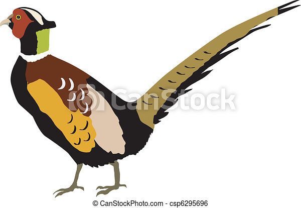 pheasant illustrations and clip art 637 pheasant royalty free rh canstockphoto com pheasant clip art free pheasant clipart black and white