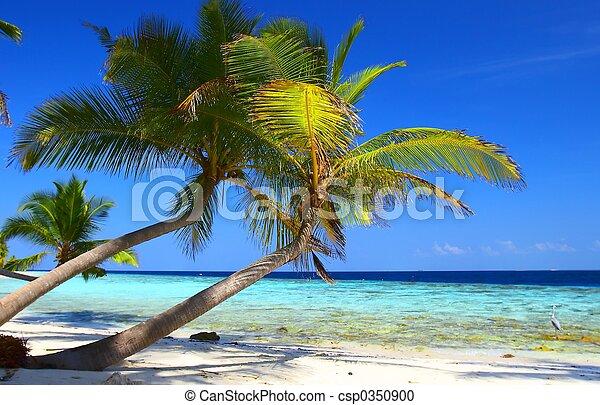 phenomenal, sandstrand, handfläche, vogel, bäume - csp0350900