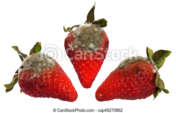 Rotten Strawberries Pictures