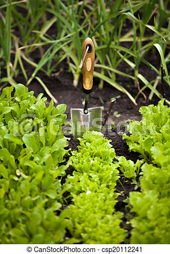 photo of salad bed with small garden shovel - csp20112241