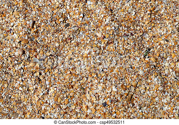 Photo shell texture on the beach - csp49532511