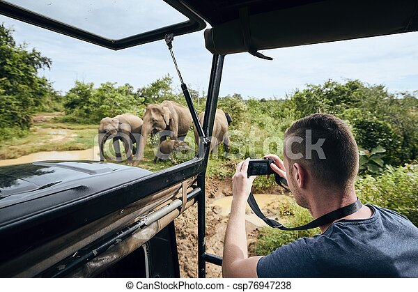 Photographing of group of elephants - csp76947238
