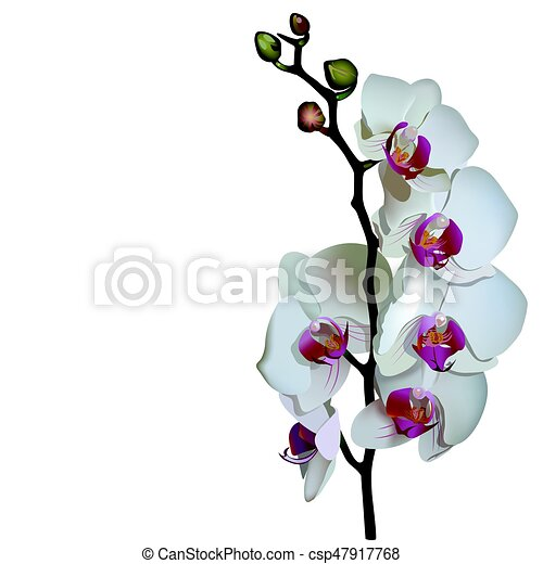 Photorealistic illustration of phalaenopsis. - csp47917768