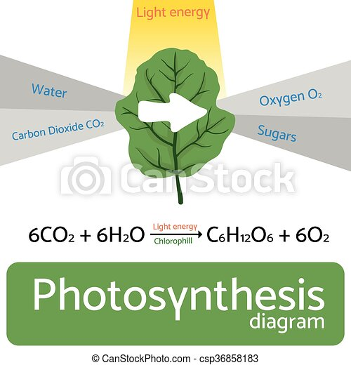 Photosynthesis diagram. schematic vector illustration of the ...
