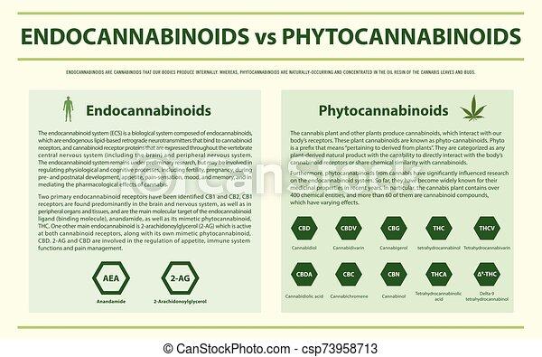 phytocannabinoids, endocannabinoids, infographic, 横, ∥対∥ - csp73958713