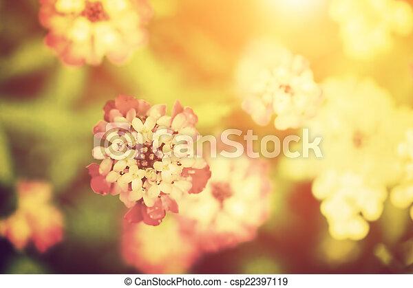piękny, kwiat, natura, rocznik wina, sunlight., style. - csp22397119
