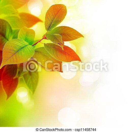 piękny, liście - csp11458744