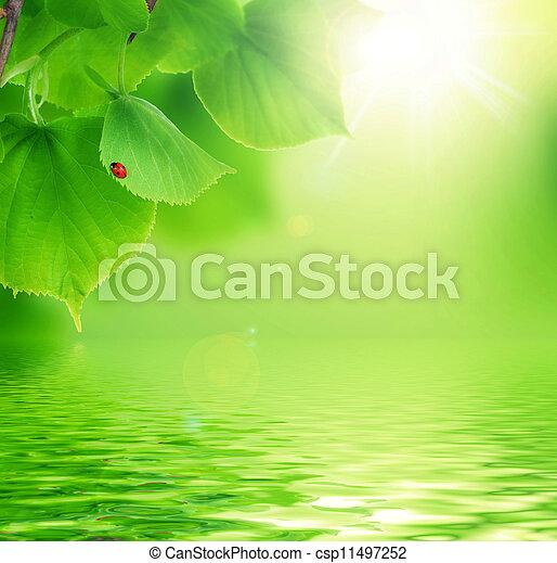 piękny, scena, natura - csp11497252
