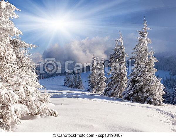 piękny, zima, drzewa., śnieg zaległ, krajobraz - csp10190407