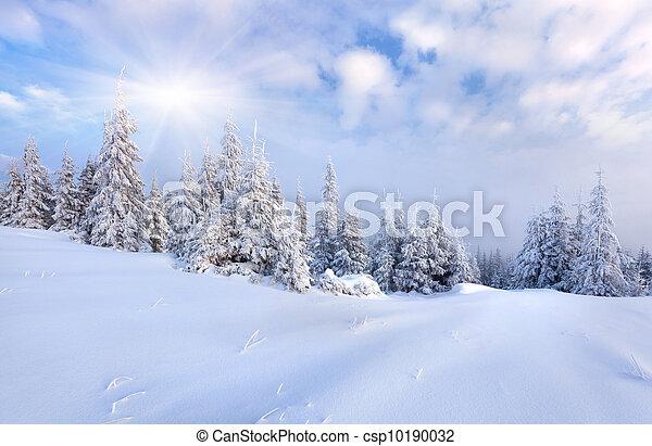 piękny, zima, drzewa., śnieg zaległ, krajobraz - csp10190032