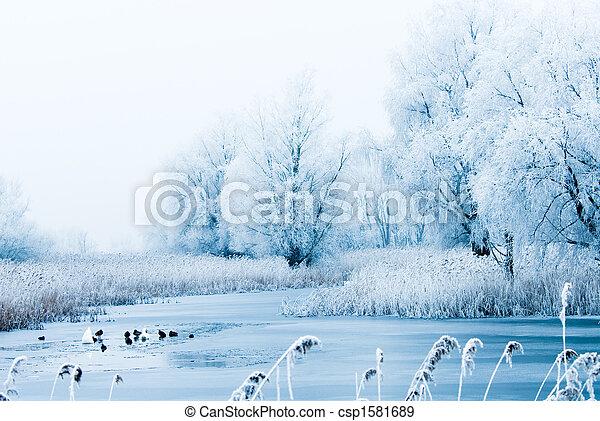 piękny, zima krajobraz - csp1581689