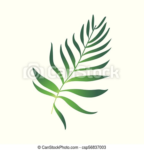 pianta, felce, vettore, verde, cartone animato, icona - csp56837003