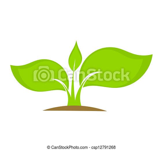 pianta, giovane - csp12791268