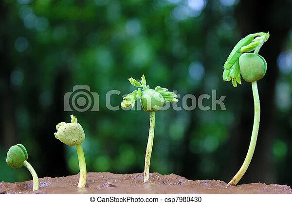 pianta, growth-baby, piante - csp7980430