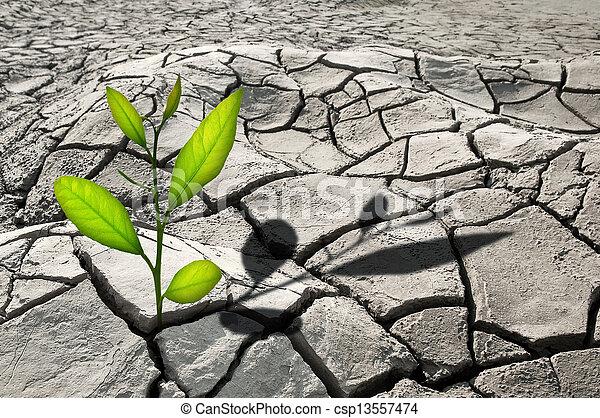 pianta - csp13557474