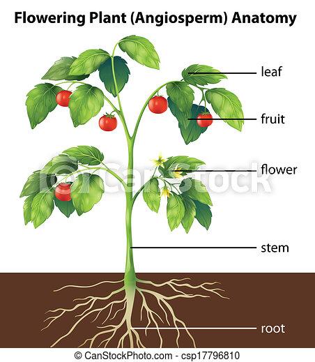pianta, parti - csp17796810