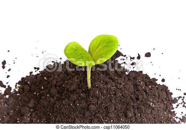 pianta, sporcizia, germoglio, isolato, verde, mucchio - csp11064050