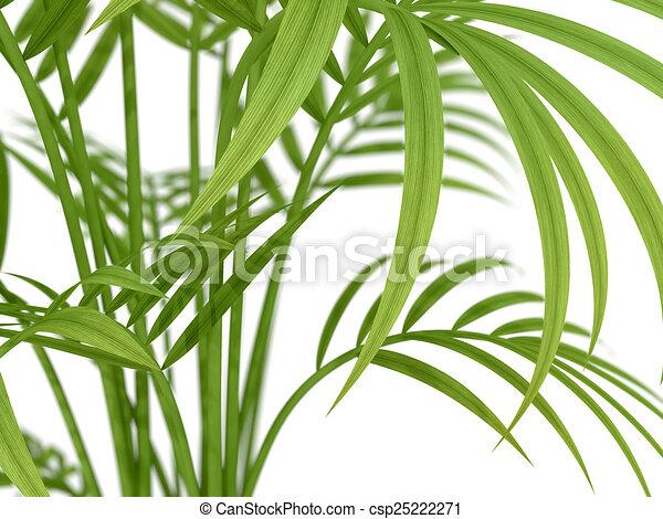 Pianta tropicale pianta rami bamb tropicale fondo for Pianta bambu prezzo