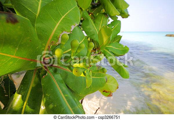 pianta tropicale - csp3266751