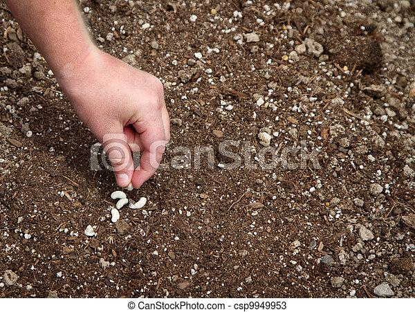 piantatura, primo piano, seme, bambino - csp9949953