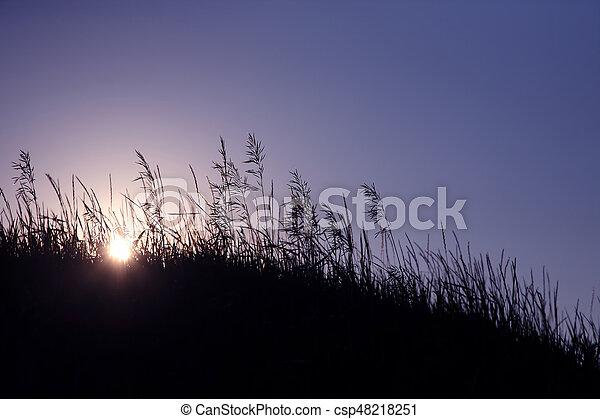 piante, sole, regolazione, silhouette, contro - csp48218251