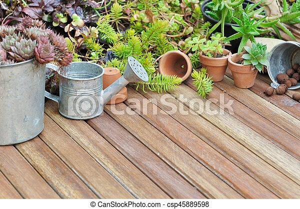 piante, succulento, terrazzo - csp45889598