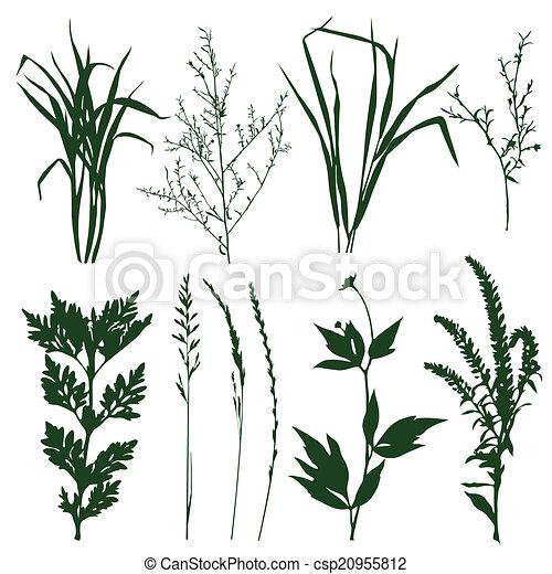 piante - csp20955812