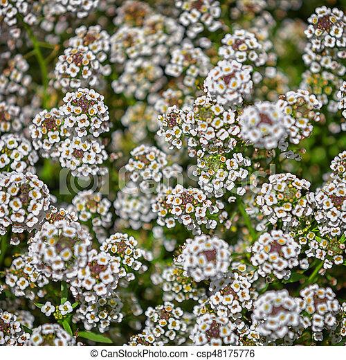 Cespuglio Fiori Bianchi.Piccolo Cespuglio Fiori Bianco Cespuglio Flowers Sfondo