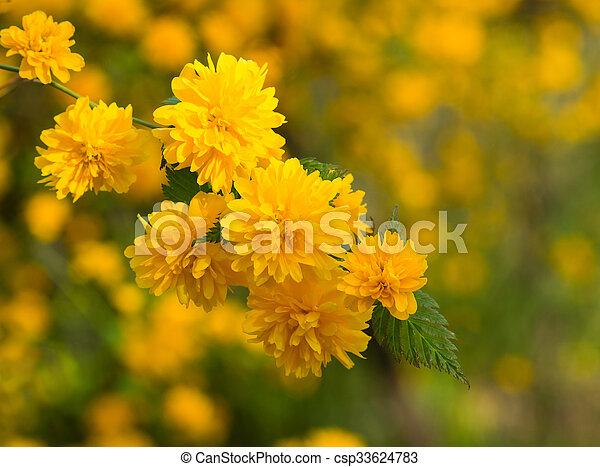 Fiori Gialli In Primavera.Piccolo Fiori Primaverili Fiore Giallo Piccolo Primavera