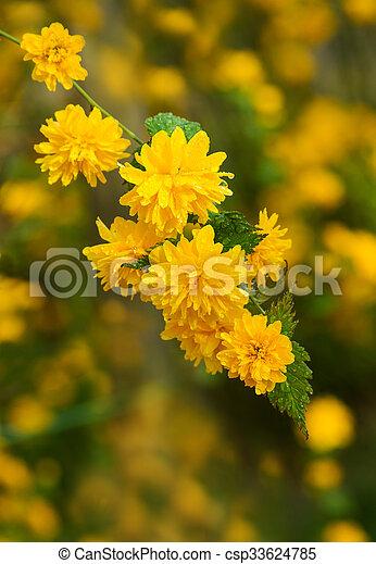 Fiori Gialli In Primavera.Piccolo Fiori Primaverili Fiore Giallo Primavera Pioggia