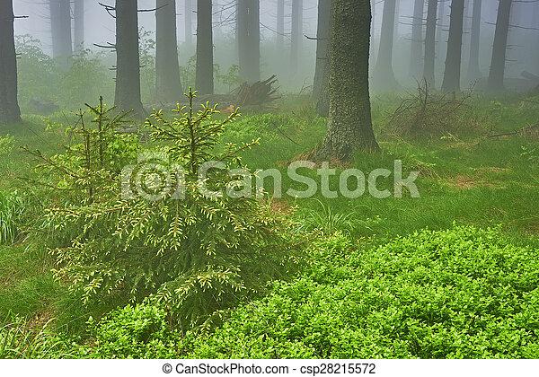 Bosque Spruce - csp28215572