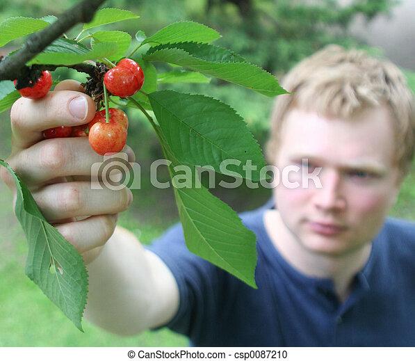 Picking cherries 2 - csp0087210