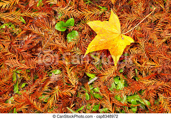 Picture style red maple leaves, gol - csp8348972