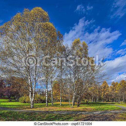Picturesque autumn landscape in golden autumnal city park - csp61721004
