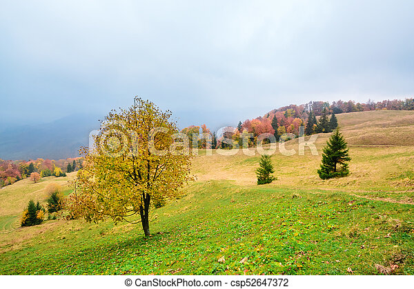 Picturesque autumn scenery in the mountains with meadow and colorful trees on foreground and fog above valley. II - csp52647372