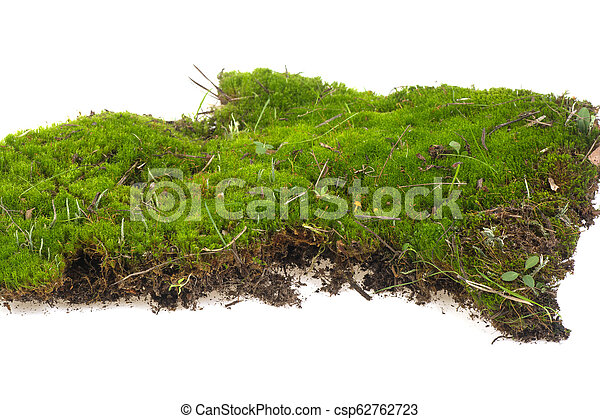 piece of moss on a white background - csp62762723