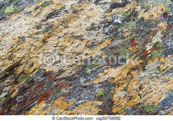 Textura de liquen en piedra - csp50756082