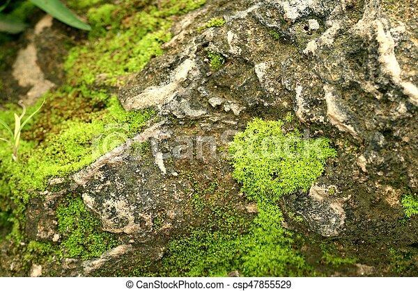 Moss en el suelo de piedra - csp47855529