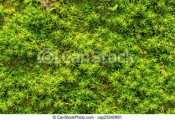 Piedra sobrecrecida con musgo verde en el bosque - csp23340891